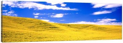 Canola Fields, Washington State, USA Canvas Art Print