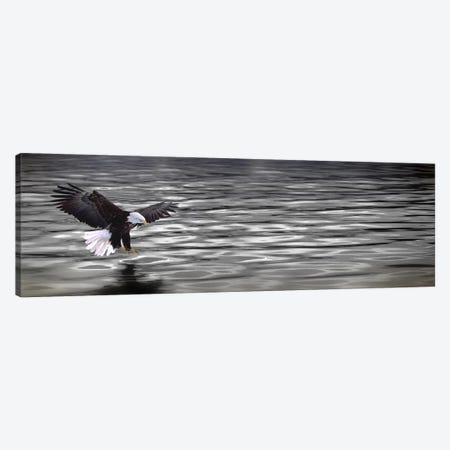 Eagle over water Canvas Print #PIM10053} by Panoramic Images Canvas Art Print