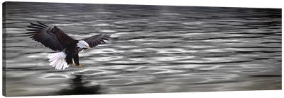 Eagle over water Canvas Print #PIM10053