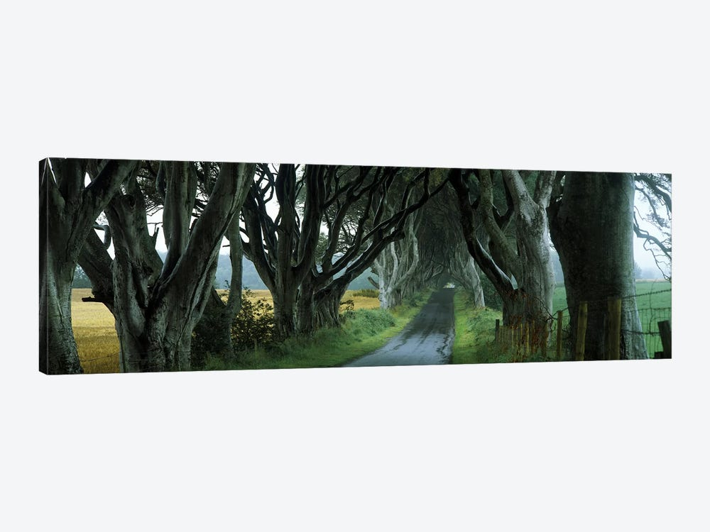 The Dark Hedges, Armoy, County Antrim, Northern Ireland, United Kingdom 1-piece Canvas Art