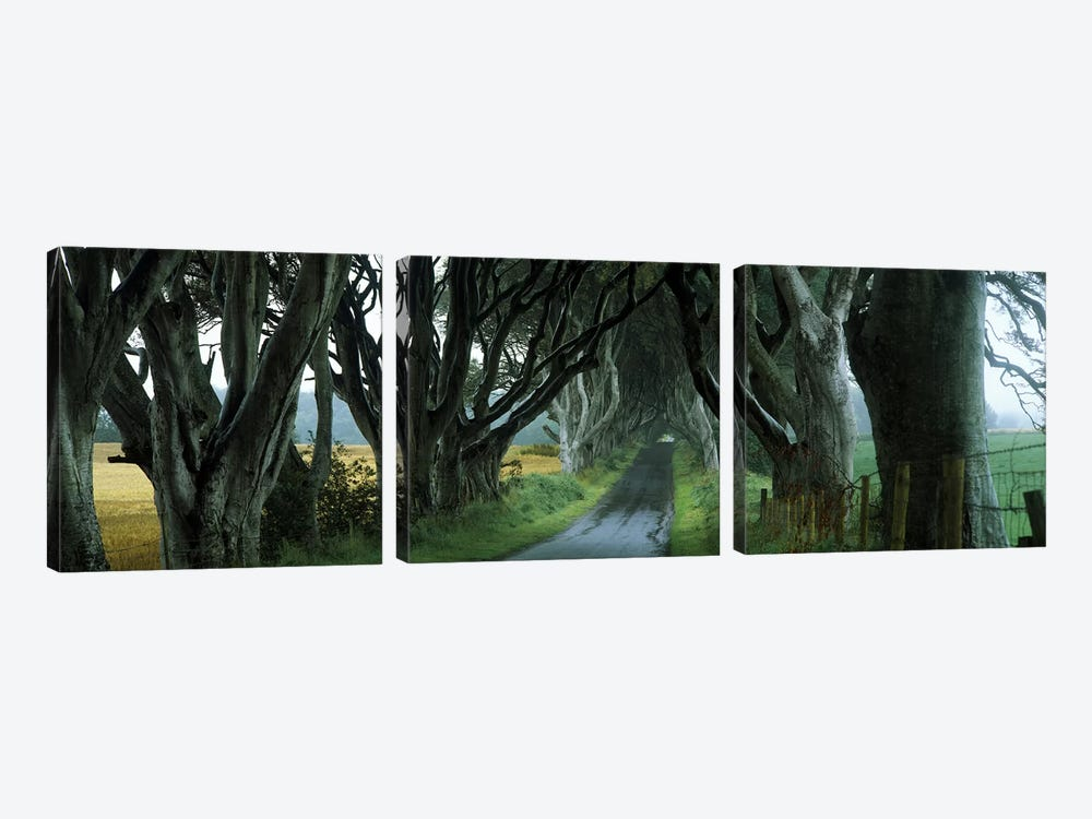 The Dark Hedges, Armoy, County Antrim, Northern Ireland, United Kingdom by Panoramic Images 3-piece Canvas Artwork