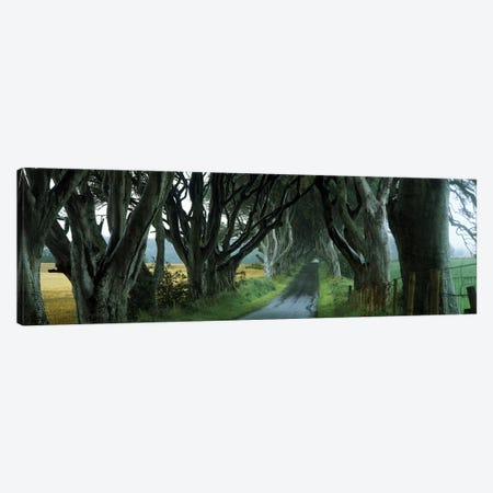 The Dark Hedges, Armoy, County Antrim, Northern Ireland, United Kingdom Canvas Print #PIM10066} by Panoramic Images Art Print