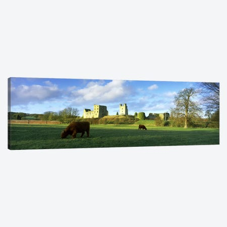 Highland cattle grazing in a fieldHelmsley Castle, Helmsley, North Yorkshire, England Canvas Print #PIM10092} by Panoramic Images Canvas Art Print