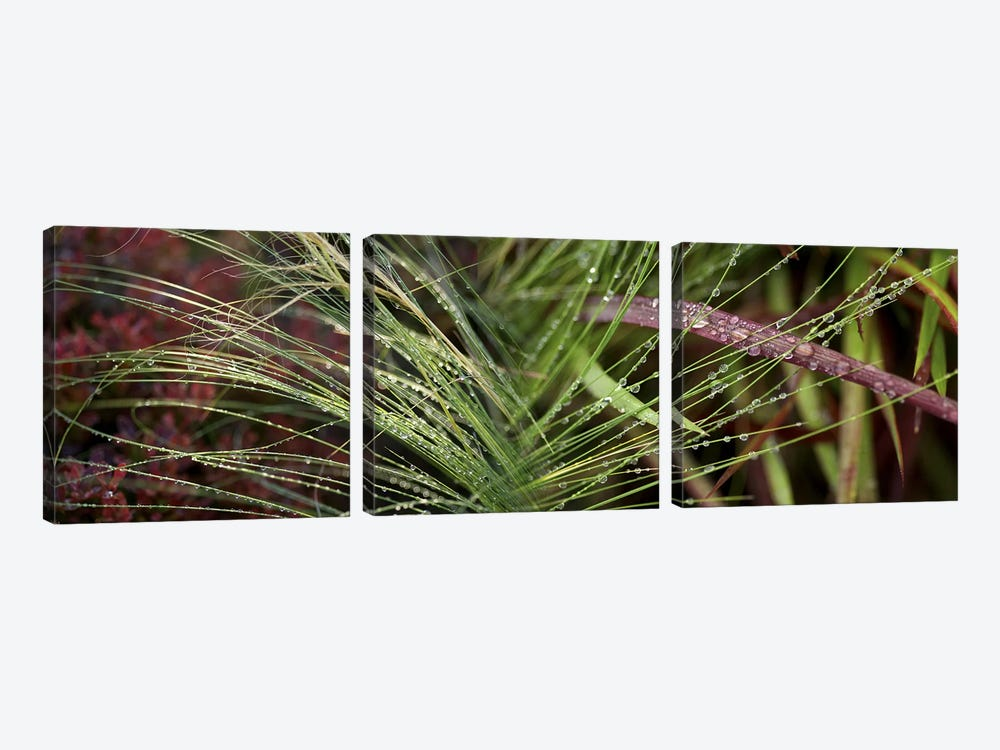 Dew drops on grass by Panoramic Images 3-piece Canvas Wall Art