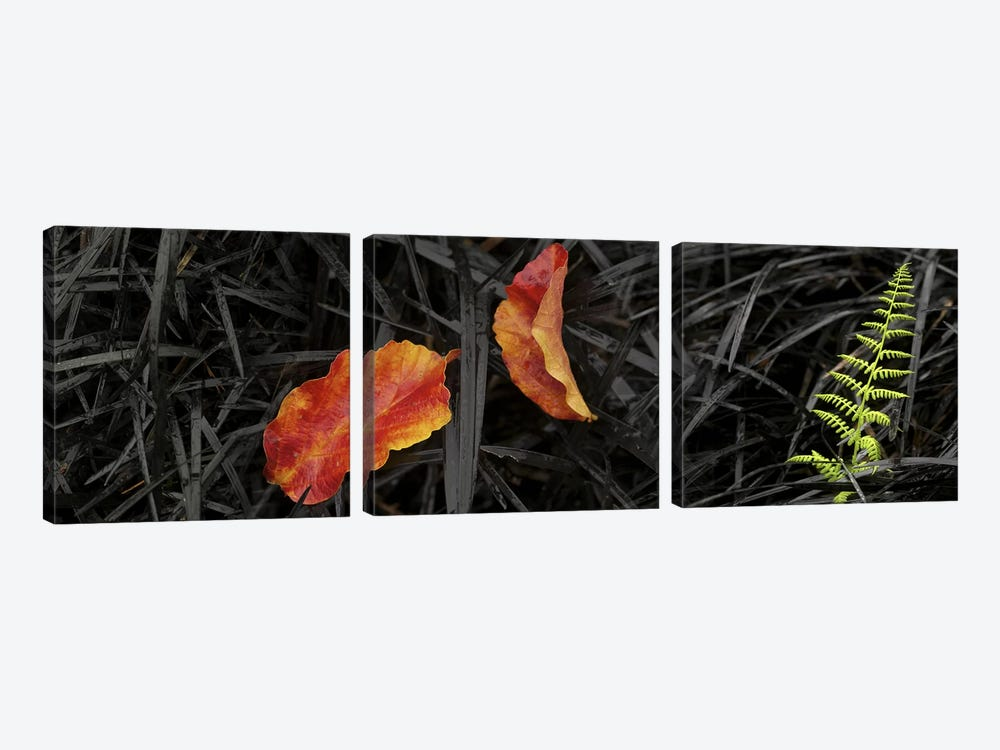 Close-up of different leaves by Panoramic Images 3-piece Canvas Print