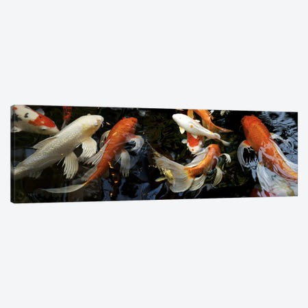 Koi Carp swimming underwater Canvas Print #PIM10218} by Panoramic Images Canvas Art Print