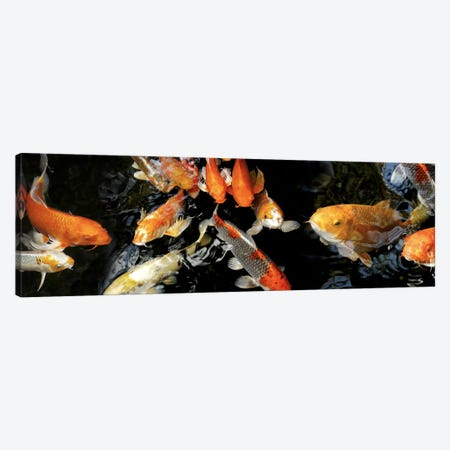 Koi Carp swimming underwater #2 Canvas Print #PIM10219} by Panoramic Images Canvas Art Print