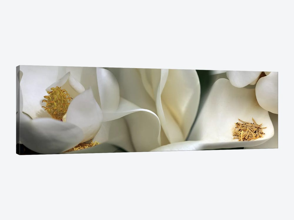 Magnolia heaven flowers by Panoramic Images 1-piece Art Print
