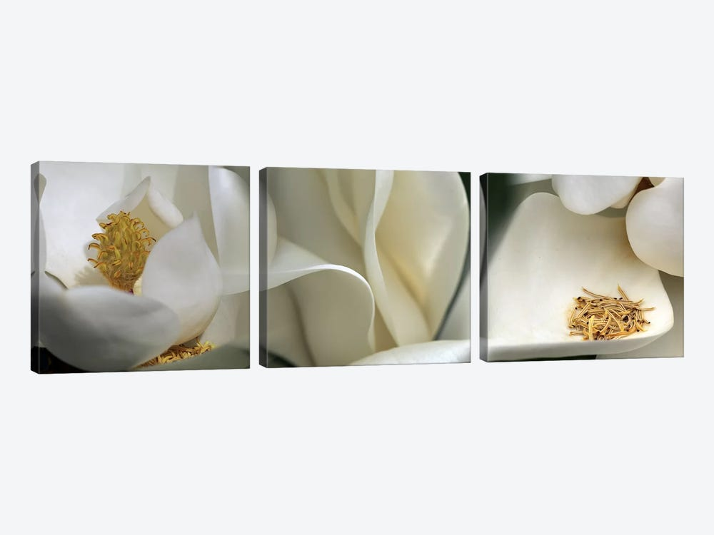 Magnolia heaven flowers by Panoramic Images 3-piece Art Print