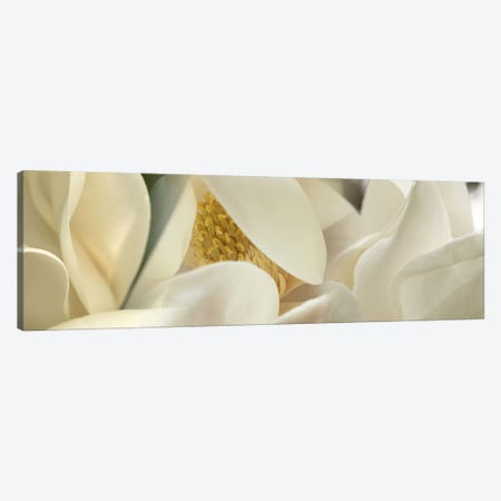 Magnolia heaven flowers Canvas Print #PIM10221} by Panoramic Images Canvas Artwork