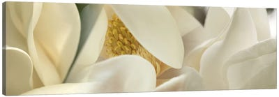 Magnolia heaven flowers Canvas Art Print