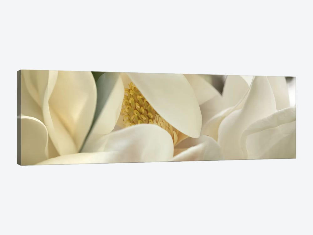 Magnolia heaven flowers by Panoramic Images 1-piece Canvas Wall Art