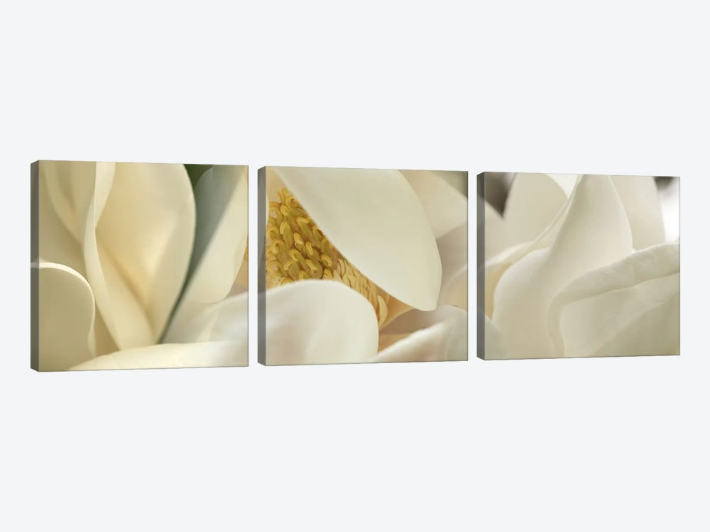 Magnolia heaven flowers by Panoramic Images 3-piece Canvas Art