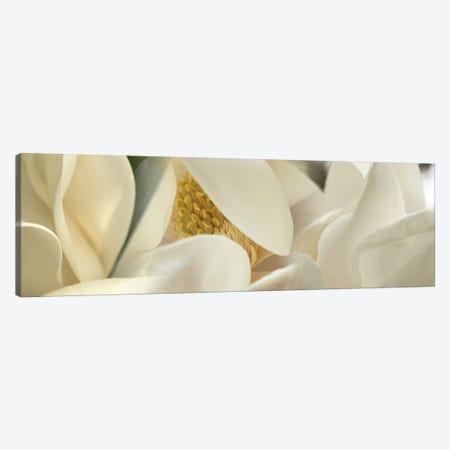 Magnolia heaven flowers Canvas Print #PIM10221} by Panoramic Images Canvas Artwork