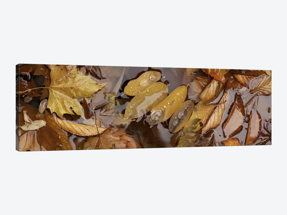 Wet leaves by Panoramic Images 1-piece Canvas Print