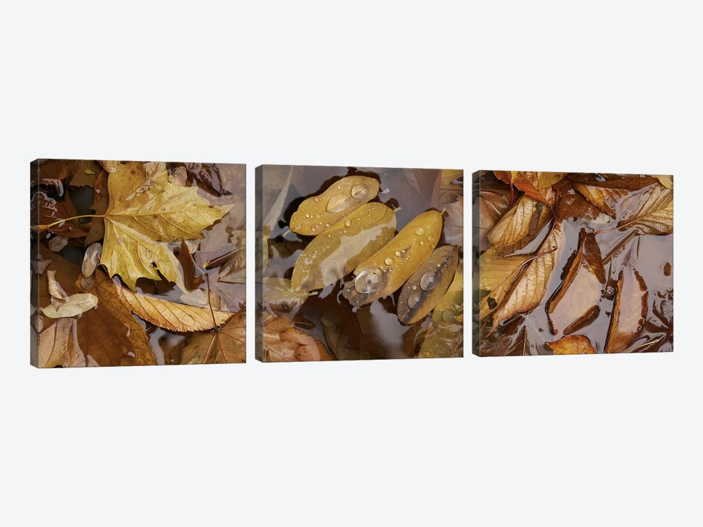 Wet leaves by Panoramic Images 3-piece Art Print