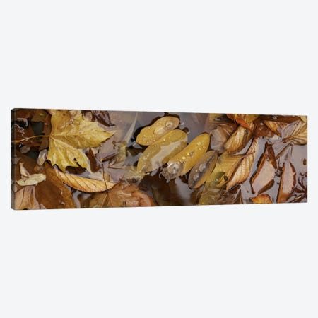 Wet leaves Canvas Print #PIM10222} by Panoramic Images Canvas Artwork