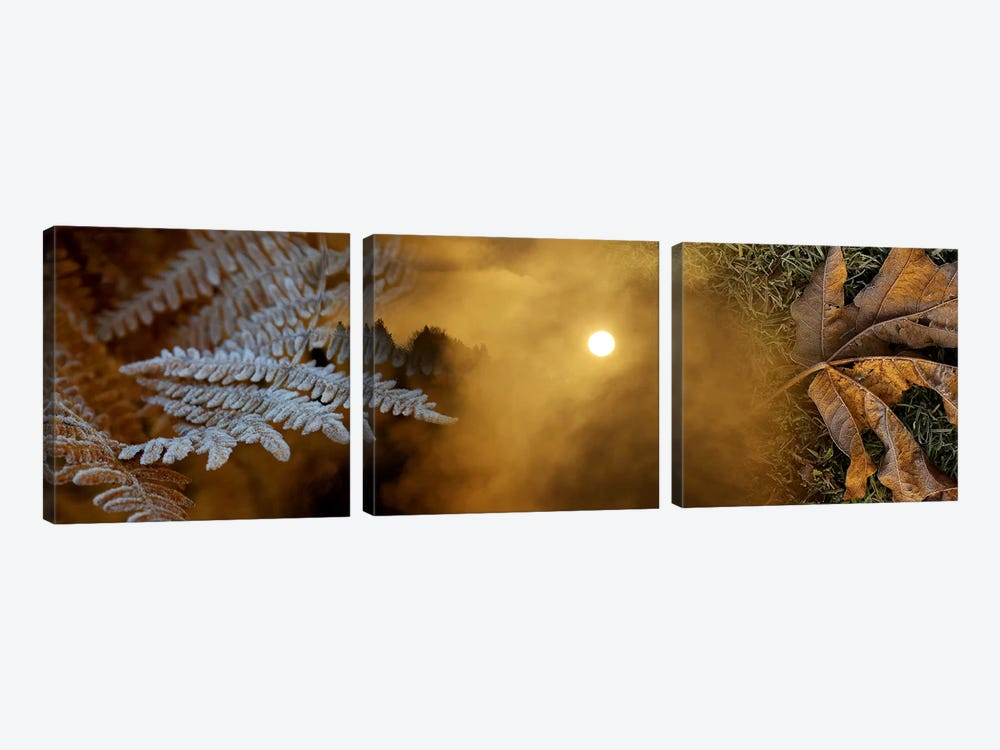 Cold feet leaves by Panoramic Images 3-piece Art Print