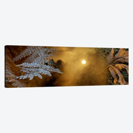 Cold feet leaves Canvas Print #PIM10224} by Panoramic Images Art Print