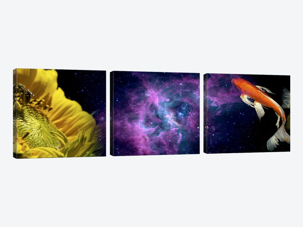 Sunflower and Koi Carp in space by Panoramic Images 3-piece Canvas Print