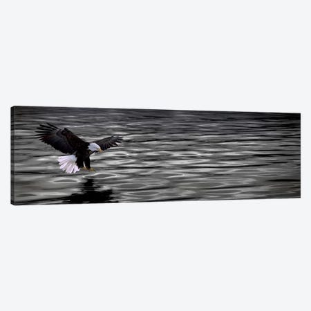 Eagle over water Canvas Print #PIM10256} by Panoramic Images Canvas Wall Art