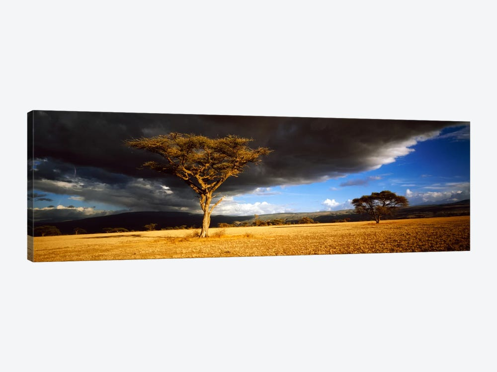 Tree w\storm clouds Tanzania by Panoramic Images 1-piece Canvas Wall Art