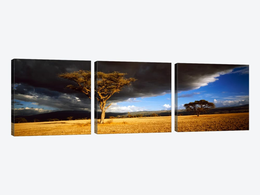Tree w\storm clouds Tanzania by Panoramic Images 3-piece Canvas Artwork
