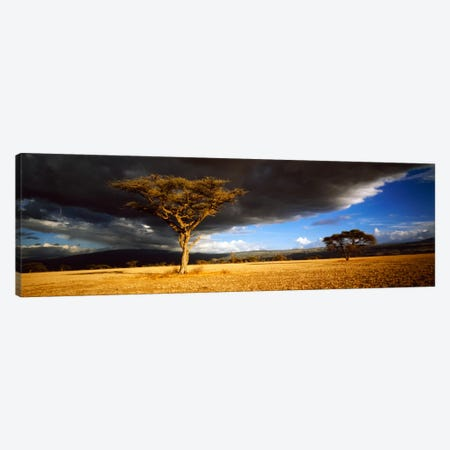 Tree w\storm clouds Tanzania Canvas Print #PIM1026} by Panoramic Images Canvas Art