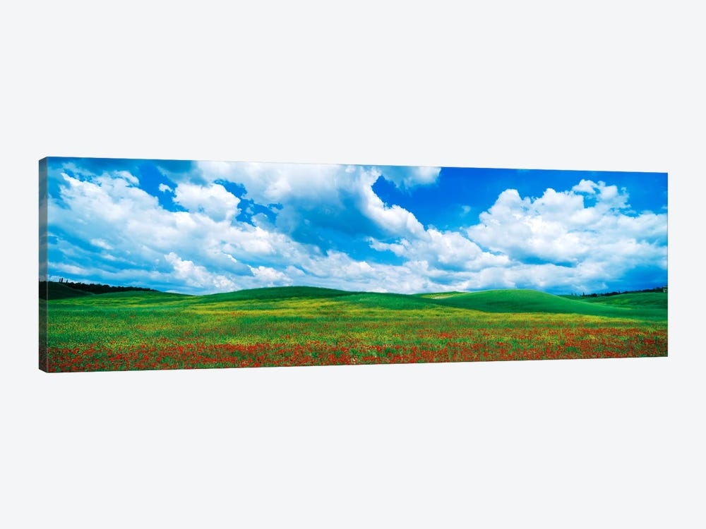 Open Field, Tuscany, Italy by Panoramic Images 1-piece Canvas Print