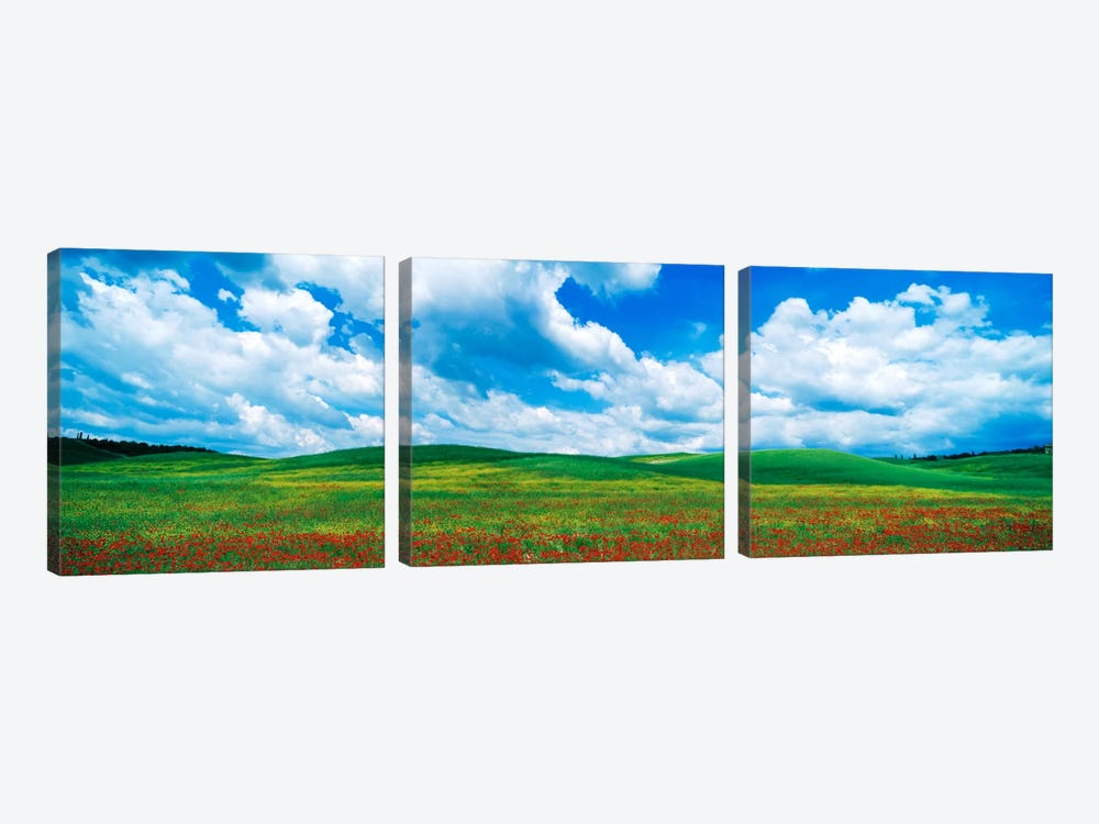 Open Field, Tuscany, Italy by Panoramic Images 3-piece Canvas Print