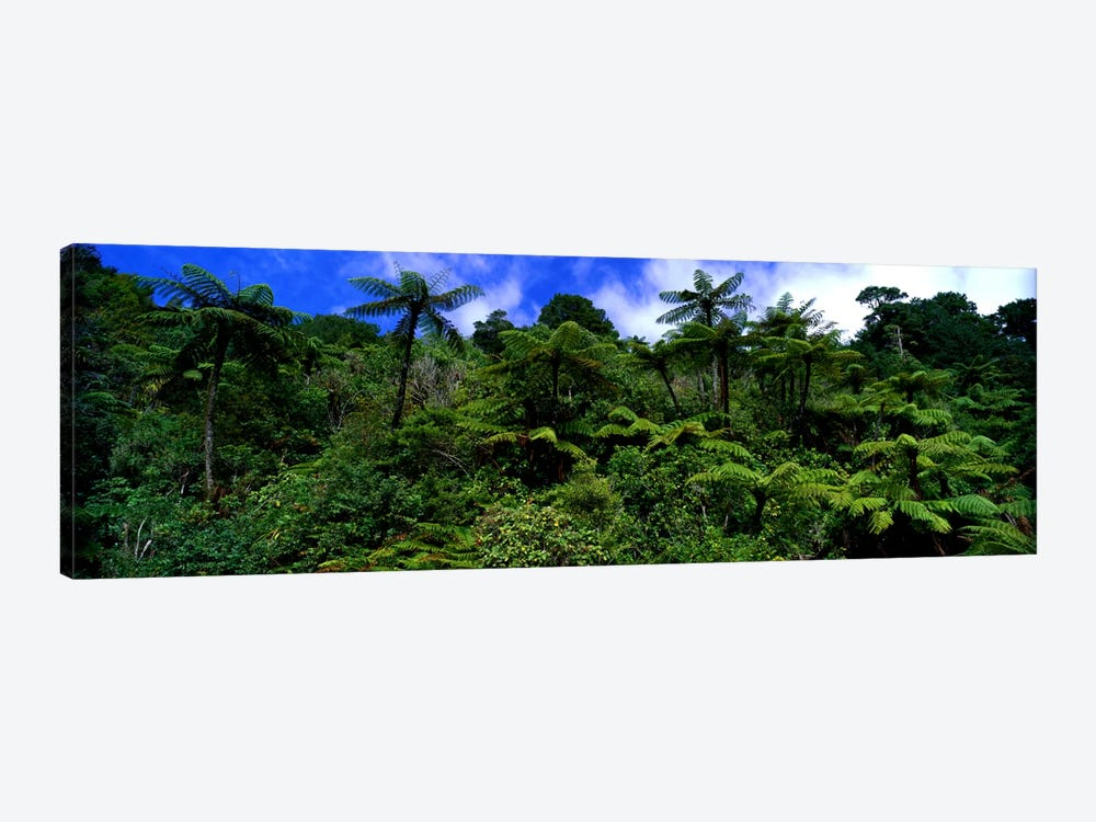 Rain forest Paparoa National Park S Island New Zealand by Panoramic Images 1-piece Art Print