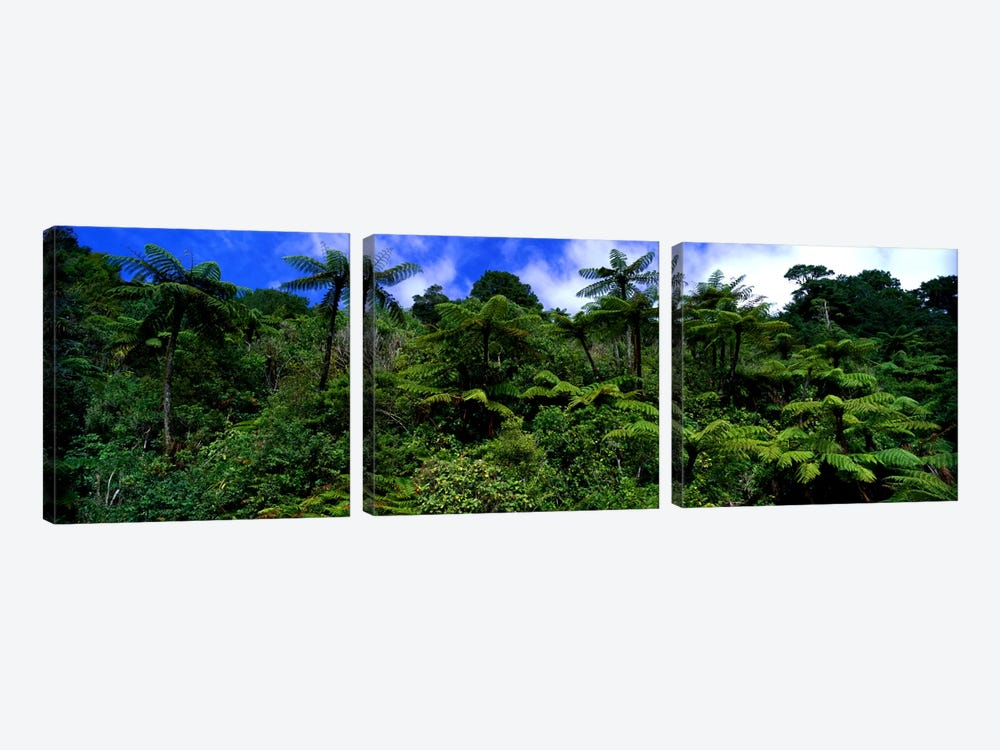 Rain forest Paparoa National Park S Island New Zealand by Panoramic Images 3-piece Canvas Art Print