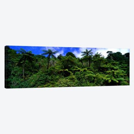 Rain forest Paparoa National Park S Island New Zealand Canvas Print #PIM1029} by Panoramic Images Canvas Print