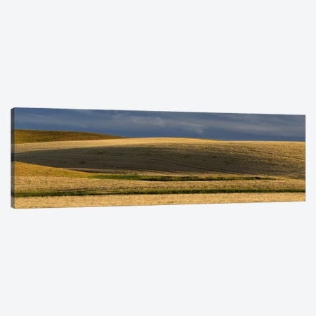 Wheat field, Palouse, Washington State, USA Canvas Print #PIM10316} by Panoramic Images Canvas Art Print