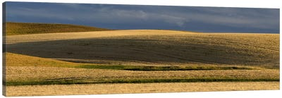 Wheat field, Palouse, Washington State, USA Canvas Art Print