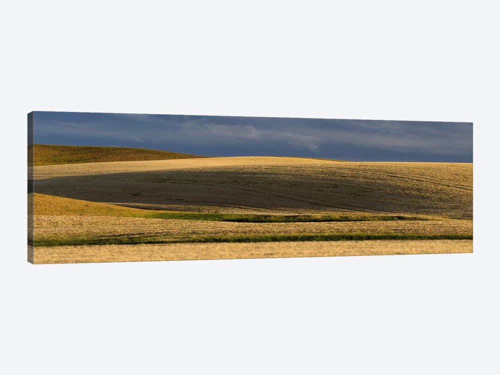 Wheat field, Palouse, Washington State, USA by Panoramic Images 1-piece Canvas Print