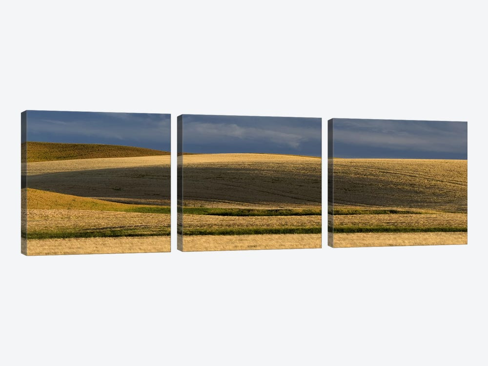 Wheat field, Palouse, Washington State, USA by Panoramic Images 3-piece Canvas Art Print