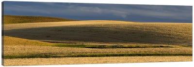 Wheat field, Palouse, Washington State, USA Canvas Art Print