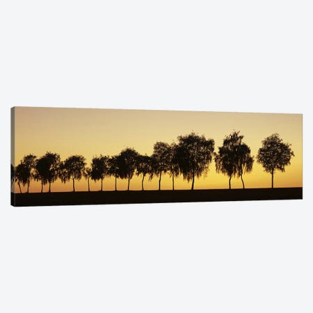 Tree alley at sunset, Hohenlohe, Baden-Wurttemberg, Germany Canvas Print #PIM10384} by Panoramic Images Canvas Art