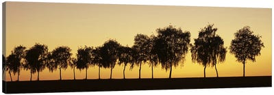 Tree alley at sunset, Hohenlohe, Baden-Wurttemberg, Germany Canvas Art Print