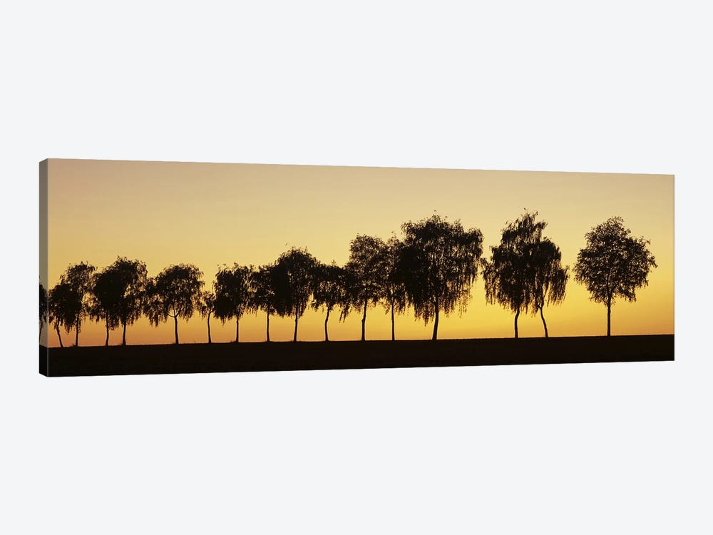 Tree alley at sunset, Hohenlohe, Baden-Wurttemberg, Germany by Panoramic Images 1-piece Canvas Art