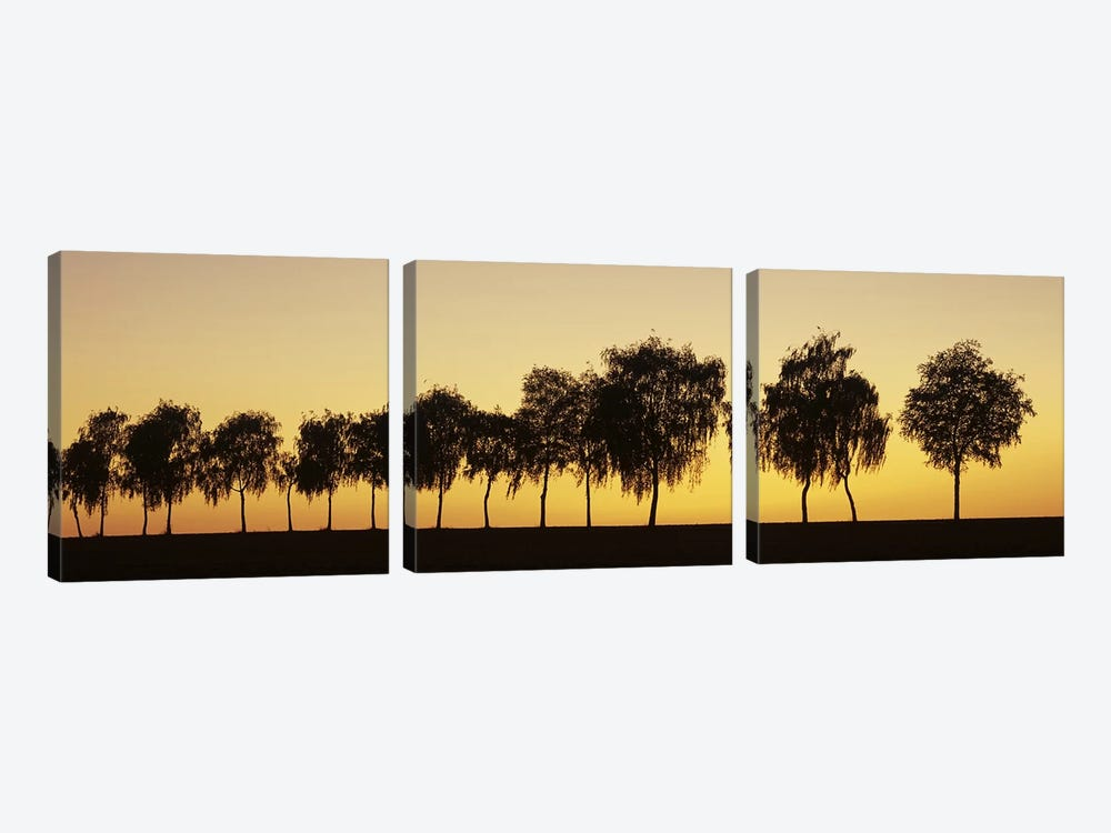 Tree alley at sunset, Hohenlohe, Baden-Wurttemberg, Germany by Panoramic Images 3-piece Canvas Wall Art