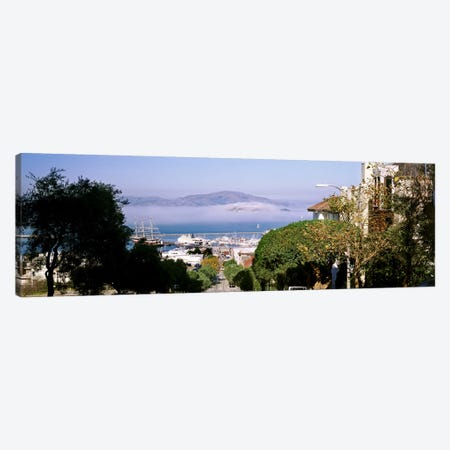 Trees along the Hyde Street, San Francisco, California, USA Canvas Print #PIM10422} by Panoramic Images Canvas Art