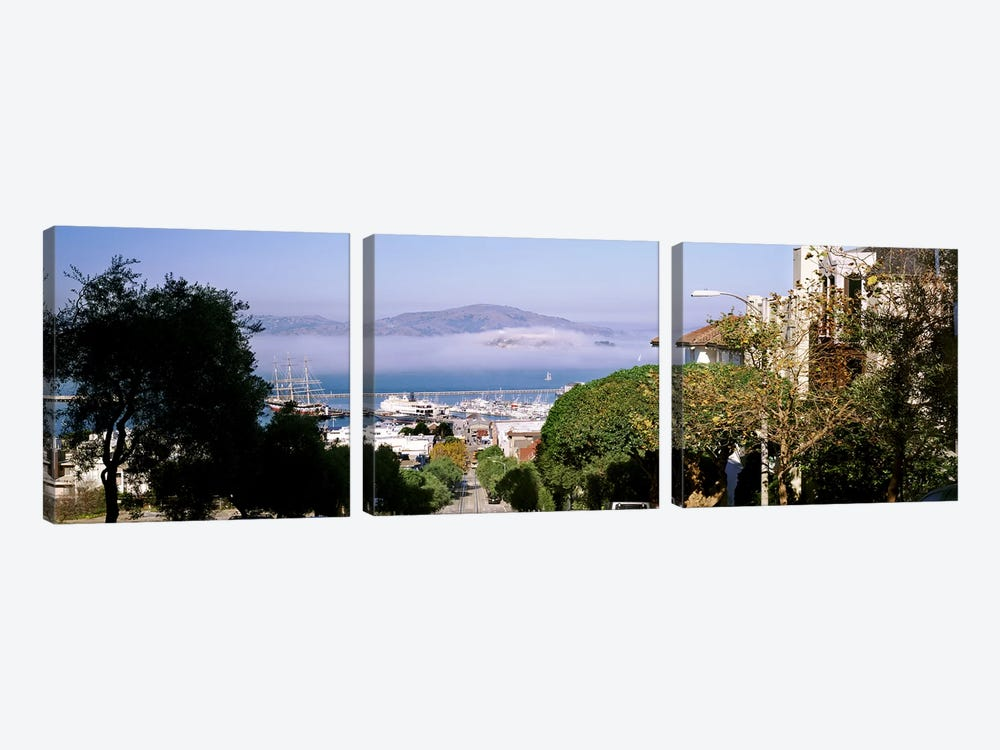 Trees along the Hyde Street, San Francisco, California, USA by Panoramic Images 3-piece Canvas Print
