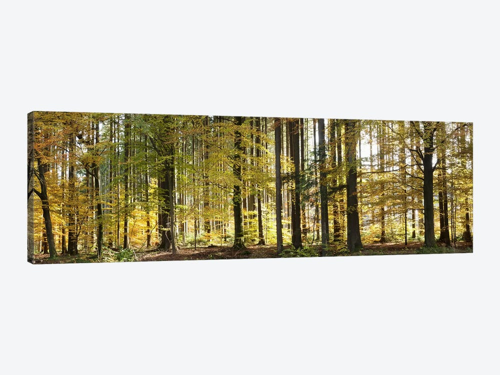 Trees in autumn, Hohenlohe, Baden-Wurttemberg, Germany by Panoramic Images 1-piece Art Print