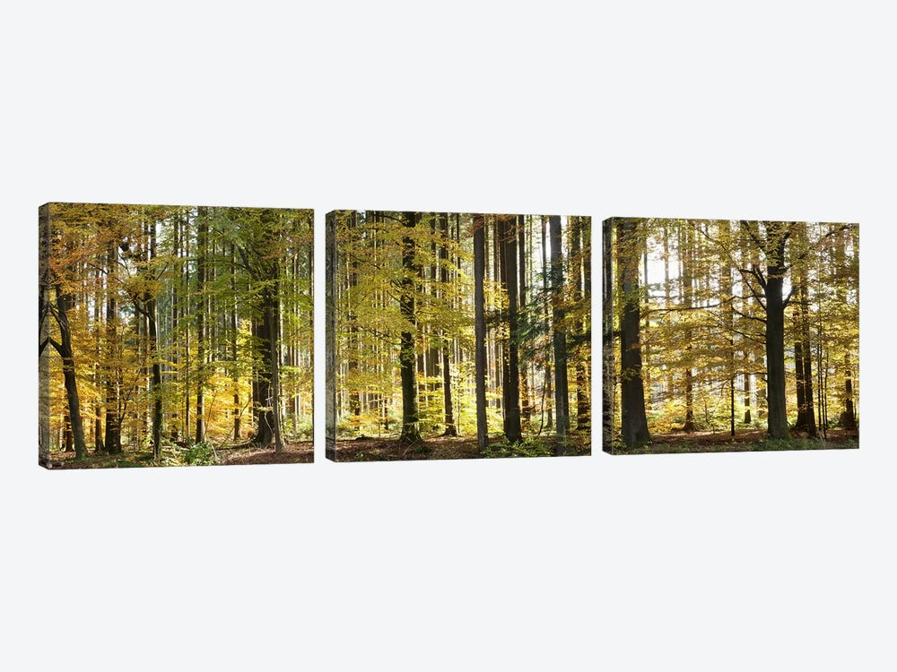 Trees in autumn, Hohenlohe, Baden-Wurttemberg, Germany by Panoramic Images 3-piece Canvas Art Print