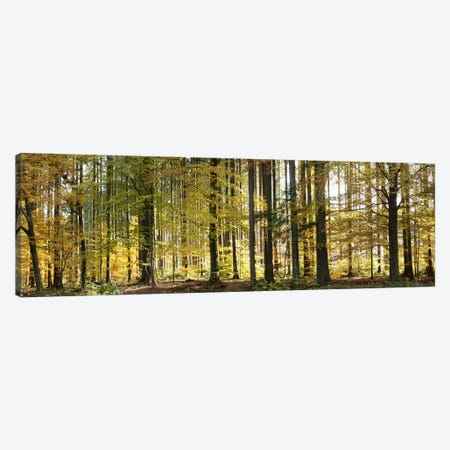 Trees in autumn, Hohenlohe, Baden-Wurttemberg, Germany Canvas Print #PIM10437} by Panoramic Images Canvas Artwork