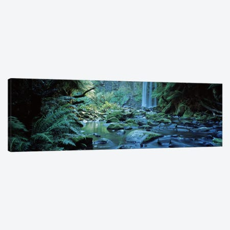 Waterfall in a forest, Hopetown Falls, Great Ocean Road, Otway Ranges National Park, Victoria, Australia Canvas Print #PIM10457} by Panoramic Images Canvas Art