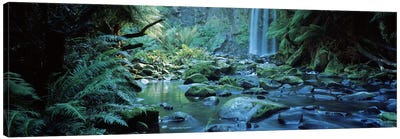 Waterfall in a forest, Hopetown Falls, Great Ocean Road, Otway Ranges National Park, Victoria, Australia Canvas Art Print
