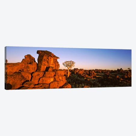 Quiver tree (Aloe dichotoma) growing in rocksDevil's Playground, Namibia Canvas Print #PIM10468} by Panoramic Images Canvas Wall Art